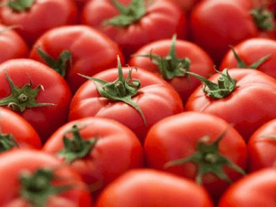 토마토 효능 11가지 보관법 확인