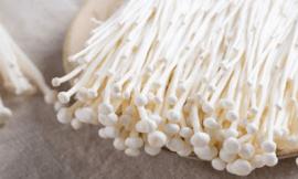 팽이버섯 효능 10가지 부작용 정보