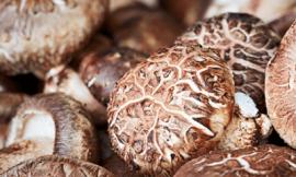 표고버섯 효능 10가지 부작용 탐구