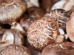 표고버섯 효능